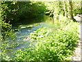 SK1453 : River Dove by Colin Smith