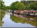 SJ9381 : Adlington Basin, Macclesfield Canal : Week 23