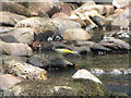 SD6916 : Grey Wagtail by John Tustin