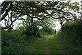SX1151 : Fowey: woodland edge by Martin Bodman