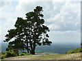 TQ1343 : View From Leith Hill, Surrey : Week 28