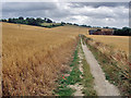 TQ9351 : The Pilgrim's Way near Cobham Farm by Andy Stephenson