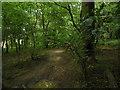TL0620 : In Badgerdell Woods by Bill Haddon