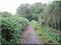 SJ3178 : Bluebell Lane Bridleway by David Quinn