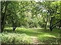 SP3800 : Woodland path, on Harrowdown Hill by Roger Cornfoot