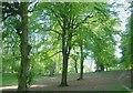 SP3318 : Forest Trail, Wychwood Forest by Kurt C
