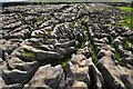 SD8964 : Limestone pavement at Malham Cove : Week 33