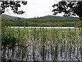 NR7789 : Loch Coille-Bharr : Week 34