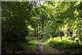 SU7497 : Footpath in Aston Wood by Steve Daniels