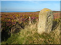 SW3833 : Boundary stone on Carnyorth Common by Rod Allday