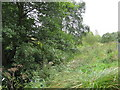 SJ7681 : Overgrown Mill Stream, Tatton Park by Peter Whatley