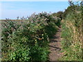 SJ2877 : Footpath at the Old Quay, Neston. by Eirian Evans