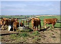 SX1952 : Cattle on the hilltop by Tony Atkin