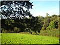 SW8949 : Small paddock at Ventonglidden by Rod Allday