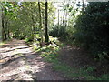 TQ3929 : Bridleway from Newnham's Wood merges with track to Newnham's Wood house by Dave Spicer