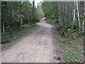 TQ3929 : Birchgrove Wood by Dave Spicer