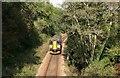 SX2457 : The Looe Train by roger geach