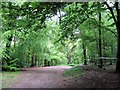 SP8910 : Track through the Mountain Bike Area, Aston Hill Coppice by Chris Reynolds