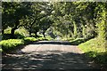SX1660 : Road looking south through the trees by roger geach