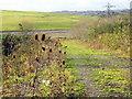 SX5154 : Footpath south of Sellar Acres by Rod Allday