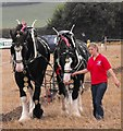 SO2191 : Horse ploughing by Penny Mayes