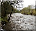 NZ0436 : River Wear below Bollihope Burn confluence by Andy Waddington
