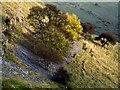 SK1775 : Cressbrook Dale, near Litton by Dave Hitchborne