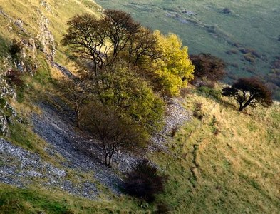 SK1775 : Cressbrook Dale, near Litton by Dave Hitchborne