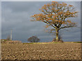 TL9250 : Field and autumn tree : Week 48