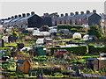 SE3056 : Allotment Gardens : Week 49