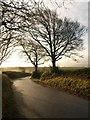 SX6698 : Trees at North Wyke (2) : Week 49