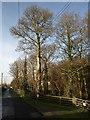SX5555 : Greenacres, Cornwood Road, Plympton by Derek Harper