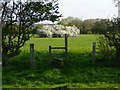 SJ7876 : Footpath and stile leading to pond and May blossom by Colin Park