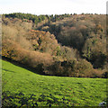 SX8774 : A valley between woods near Lindridge Hill by Robin Stott