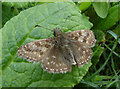SU7431 : Dingy Skipper by Alan Hunt