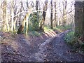 TR0953 : Bridleway in Denge Wood by David Anstiss