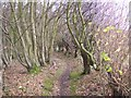 TR1053 : Footpath in Penny Pot Wood by David Anstiss