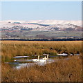 SN6963 : Swans on a flash, Cors Caron Nature Reserve by Rudi Winter