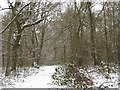 TQ4271 : Winter in Elmstead Woods (6) by Stephen Craven