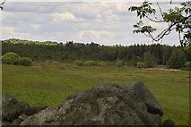 M9942 : Afforestation at Bealnamulla bogs by Clive Darling