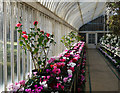 J3372 : Interior of the Palm House by Rossographer