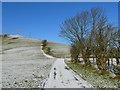 SH8904 : Lwybyr Glyndwr uwchben Llanbrynmair /Glyndwr's Way  above Llanbrynmair : Week 5