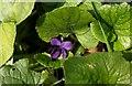 SX0562 : Violet, Trebell Green by Derek Harper