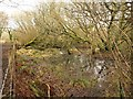 SX0560 : Marshy woodland,  Breney Common by Derek Harper