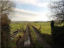 SX0360 : Track to Penhale by Derek Harper