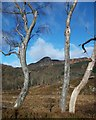 NN4906 : Trees on woodland walk near Loch Katrine : Week 5