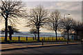 SX5055 : Trees on Embankment Road - Plymouth by Mick Lobb