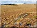 NS4278 : Cornstone outcrop by Lairich Rig