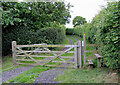 SJ6151 : Track to Stoneley Green, Cheshire by Roger  Kidd