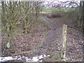TQ8530 : The High Weald Landscape Trail in a copse by David Anstiss